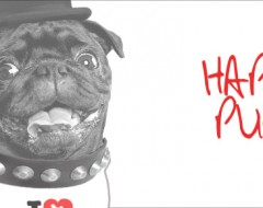 Coming soon new fitted ladies T-shirt with 'Happy Pug! design