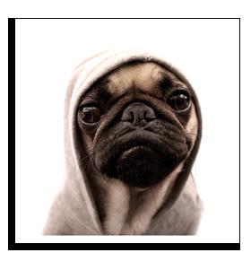 E.T. Pug Card