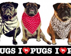 Bandanas for Pugs