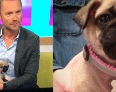 Ronan Keating & girlfriend Storm Uechtritz welcome pug puppy Aussie into their lives