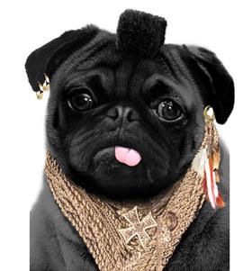 Mr P Pug T Shirt Adult Unisex I Love Pugs
