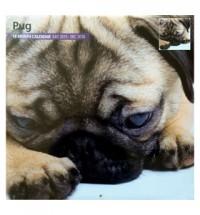 2016 18 Month Pug Calendar (Studio)