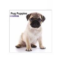 2016 12 Month Pug Puppy Mini Calendar