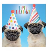 Pug Puppies in Hats Birthday Card