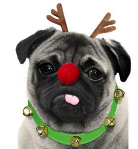 Rudolf Pug T Shirt Adult Unisex I Love Pugs