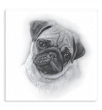 Sketched Pug Card