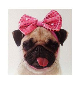 Pink bow blank pug card