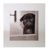 Black pug puppy blank card