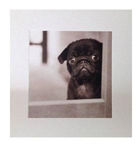 Black pug puppy blank card