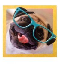 Pug in specs blank card