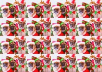 Three Pugs Christmas Gift Wrap  Small Sheet & Tag
