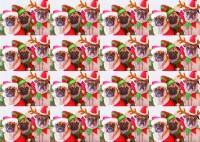 Three Pugs Christmas Gift Wrap Sheet & Tag