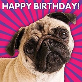 3D Fawn Pug Birthday Card