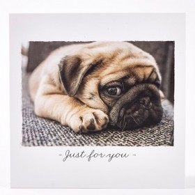 Just For You Pug Blank Card