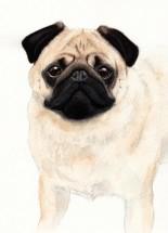 Pug Art Style Blank Card