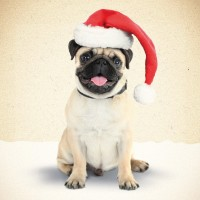 Happy Santa Pug Christmas Card