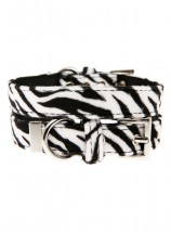 Urban Pup Zebra Print Collar