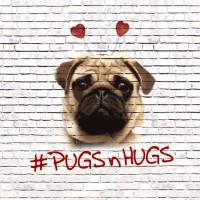 Pugs N Hugs Blank Card