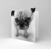 Black & White Blank Pug Card