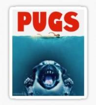 Jaws Pug Blank Card