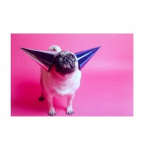 Pink Cones Pug Blank Card