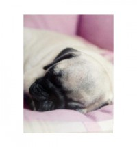 Sleeping Pug Blank Card