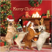 Pug Christmas Conga card