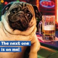Pug Funny Birthday Card