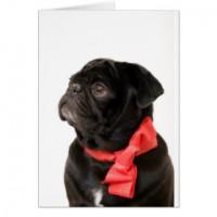 Black Pug Postcard