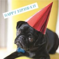 Black Pug Birthday Card