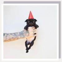 Cute Black Pug Blank Crad
