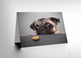 Naughty Pug Blank Card