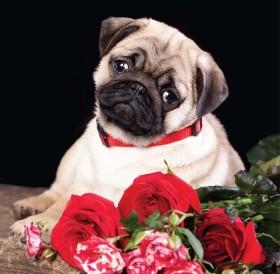 Cute Pug Puppy Blank Card