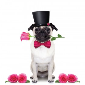Romantic Pug Blank Card
