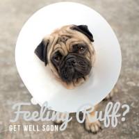 Pug Get Well Card