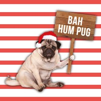 Bah Hum Pug  Christmas Card