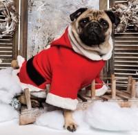 Festive Pug Christmas Card