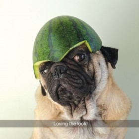 I carried A Watermelon Pug Blank Card
