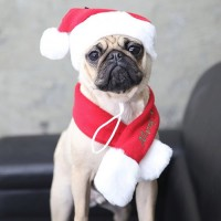 Puppia Santa Christmas Hat