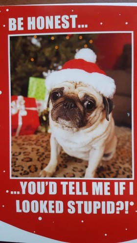 Funny Pug Christmas Card