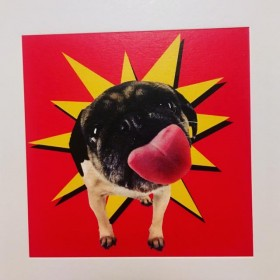 Funny Pug Blank Card