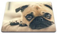 Cute Close Up Pug Mouse Mat