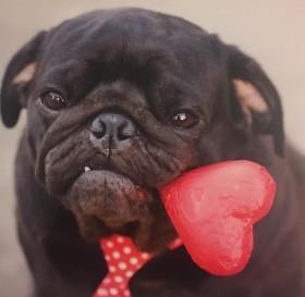 Cute Black Pug Blank Card