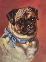 Stunning Vintage Pug Blank Card
