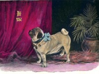 Lovely Vintage Pug Blank Card