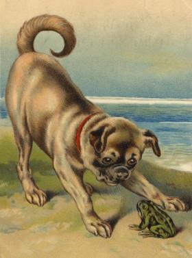 Stunning Vintage Pug & Frog Blank Card