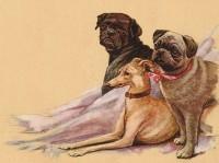 Stunning Vintage Pugs Blank Card