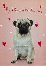 Cute Pug Valentines Day Card