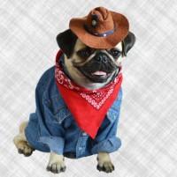 Cowboy Pug Blank Card