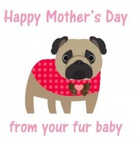 From Your Fur Baby Pug Mothers Day Card